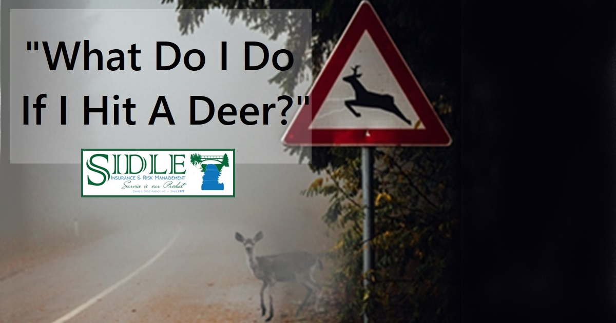 Title Photo - What Do I Do If I Hit A Deer